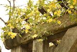 Travllers Rest Herb Garden