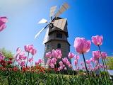 #Spring Scene