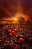 Pumpkins at sunset