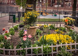 DeFilippo Garden in Bloom