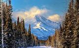 Late Winter Scene Tok Alaska USA