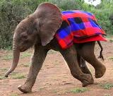 Ivory Orphan~Nairobi