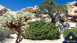 Joshua Tree National Park, California USA.by Marie Ange Lombok f