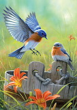 Bluebirds by the Bucket ~ Joseph Hautman