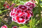 De mi jardin 336