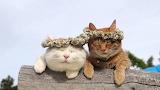 Kool cats