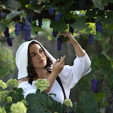 Girl picking grapes
