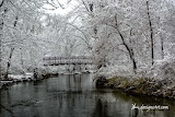 Snow Bridge Over Clinton River cardinal