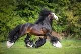 Horse with feathers