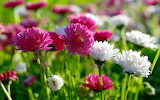 0 NICE FLOWERS