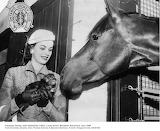 kitten, horse, Woodbine Racetrack