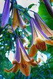 Hanging blooms