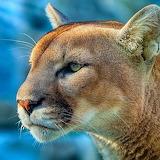 Intense Puma...