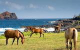 Hana maui coastline horses