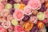 #Pastel Roses of Romance