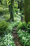 Dreamy path