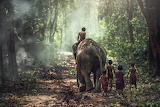 Elephant, children, kids, forest, nature