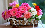 #Basket of Roses