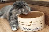 Madamma mohnblumesworld Bunny