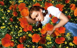 Dorothy_Poppies