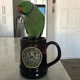 Coffee Drinking Parrot