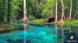Rainbow Springs Florida by Deborah Owen from auricle99 on magic