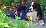 dog resting in the garden