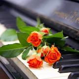 ~Orange Roses on Piano~