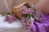Flowers, basket, bouquet, still life, lilac, silk, fabric
