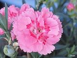 Kwiaty-foto-Bogda Strzelczyk