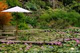 Water Gardens Pukekohe New Zealand