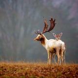 ~Autumn Deer~