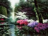 Paysage fleuri-peinture