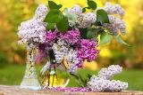 Flores rosadas 3
