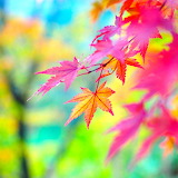Colors of Autumn...