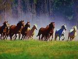Wild Horses (14)
