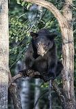 Animals tumblr mohnbloomsworld Bear
