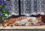 Sleeping On The Sill