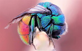 #Colorful Bee