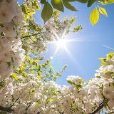 ☺ Spring sun...