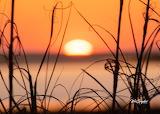 Sunset through beach grass