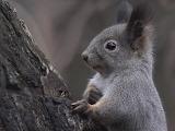 Animals squirrels