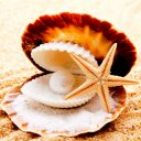 Pearl Starfish