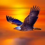 🦅American Eagle...