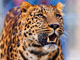 Beautiful Leopard...