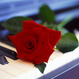 ~Piano Red Rose~
