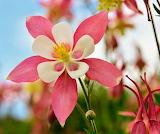 Flores902
