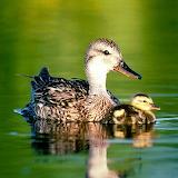 Cute Ducks...