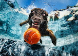 Underwater-Dogs-By-Seth-Casteel-1