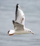 gaivota voando 9pezas